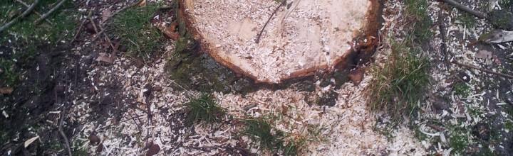 Rodungen von Büschen und Baumstümpfen